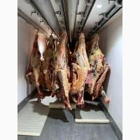 Продам мясо говядины оптом