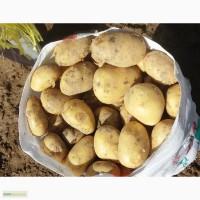 Продаем южные овощи, картофеля, фрукты, арбузы