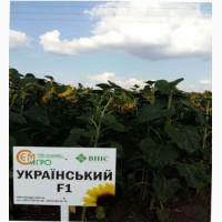 Семена гибрида подсолнечника – Украинский F1