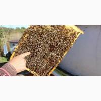Пчелопакеты карпатка с доставкой Казахстан