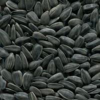 Закупаем семена подсолнечника
