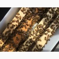 Бджолопакети карпатка рамка дадан доставка