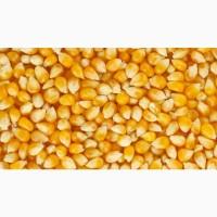 Кукуруза (Corn)