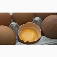 Продам яйцо Категории С-1К(отборное)