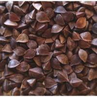 Гречиха (Buckwheat)