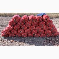Продам лук урожай2020г со склада 87017774229
