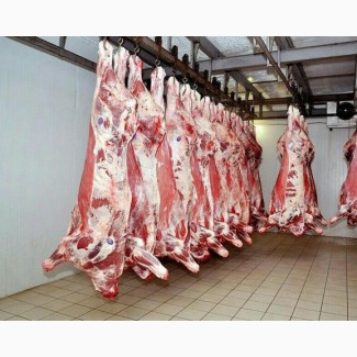Мясо оптом говядина