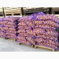 Продам картофель Гала, Розара