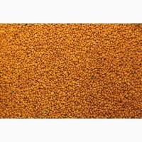Рыжик (False flax)