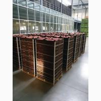 Продаём Яблоки европейских сортов отличное качество и приемлимые цены