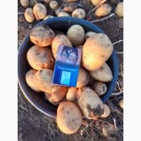 Поможем по закупке овощей (картофеля, морковки, свёклы, капусты, лука)
