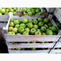 Яблоки Азербайджанские 250 Тенге