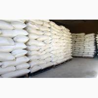 Сахар от сахарного завода с доставкой на Казахстан вагоном оптом