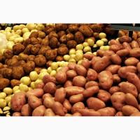 Принимаем на хранение картофель тоннами
