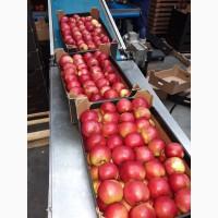 Польское яблоко.Oптовые поставки яблок из Польши