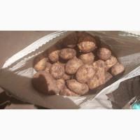 Продам картофель сорт Галла калибр от 4+ Павлодарская область