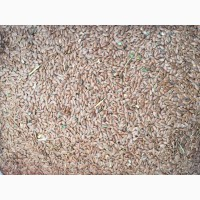 Продам лён Export of flax seeds