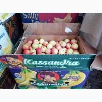 Отборные яблоки с садового хозяйства. Оптом. Супер предложение
