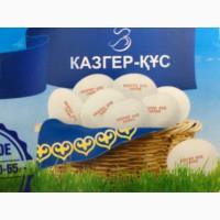 Продам яйцо Казгер кус