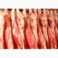Продам мясо КРС