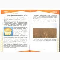 НПЦЗХ им.А.И.Бараева реализует элитные семена пшеницы урожая 2019 года