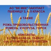 АО ВК МКК закупает пшеницу 3, 4, 5 класа в объемах