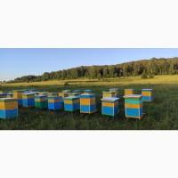Башкирский липовый мёд