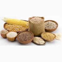 АО ВК МКК закупает рожь продовольственную, кукурузу, ячмень, горох