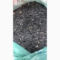 Sunflower seeds CPT Almata