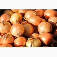 Продам лук картофель морковь