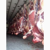 Frozen Beef Meat CPT Almata