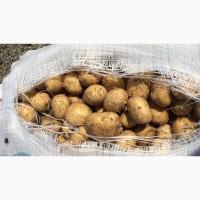 Картофель оптом по РК и на экспорт