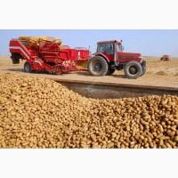 Продам товарный картофель оптом (Урожай 2018)