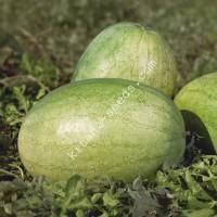 Семена арбуза KS 1819 F1