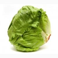 Салат Айсберг высокого качества оптом из Турции