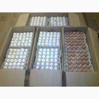 Яйца оптом от производителя