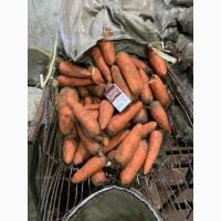 Морковь оптом сорт Каскад, Абак, Стартер, болтекс