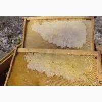 Продаю рамки пчеловодные сушь и маломедные дадан 500 шт., рутовские 500 шт