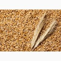Продаем пшеницу 3 и 4 класса с элеваторов по расписке